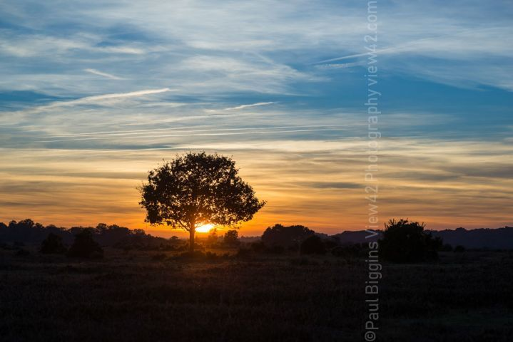 New Forest print orange tree sunset print