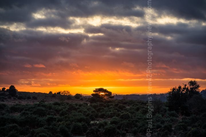 New Forest deadman bottom valley sunset print