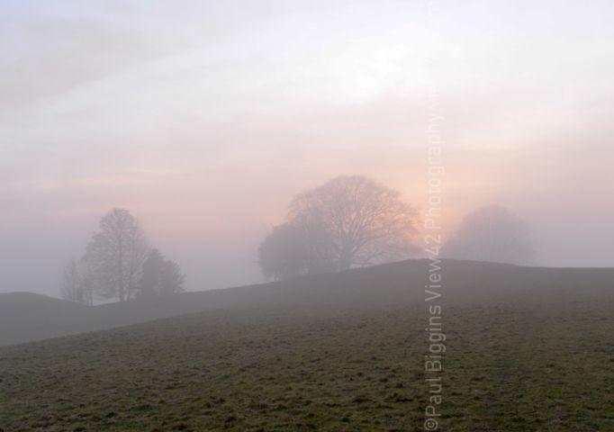 Three Trees in The Mist