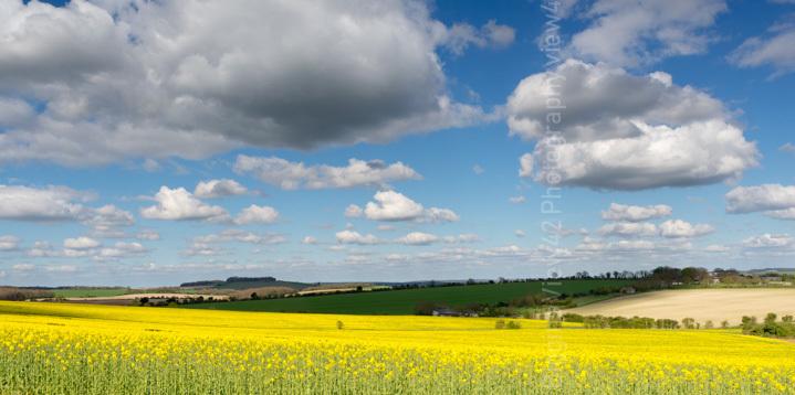 April Yellow, Breamore, Hampshire