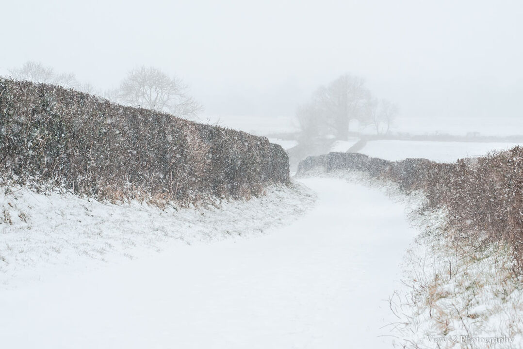 """Walking My Way Through Winter, Burgate, A3+ with 24"""" x 18"""" incl. mount, fine art paper. Limited Edition. £40"""