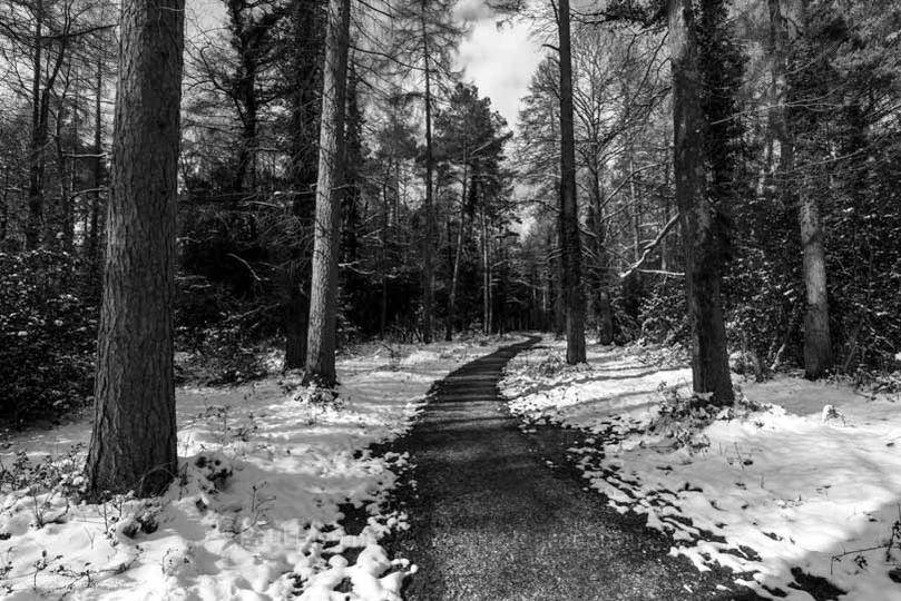 "Snow at Godshill Wood 24"" x 18"" incl. mount, fine art paper."