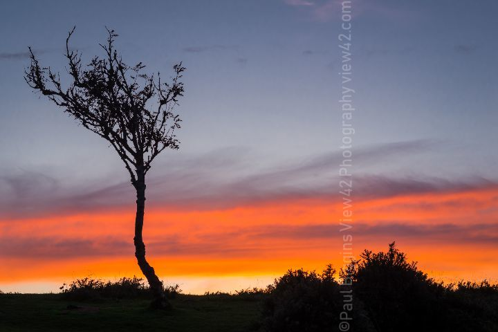 Red Sky Deadman Hill New Forest print