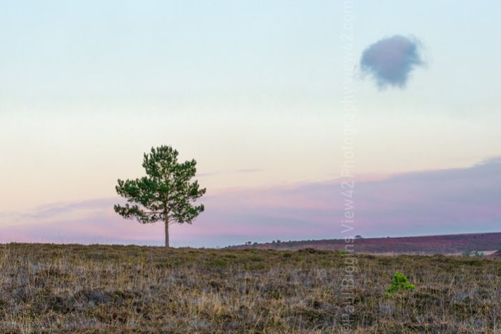 lonely tree and cloud print