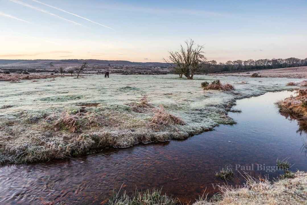 Frost at Ditchend Brook