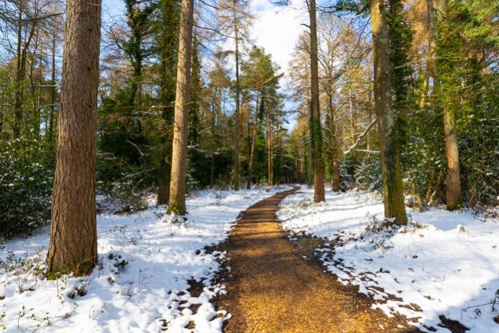 New Forest footpath snow print