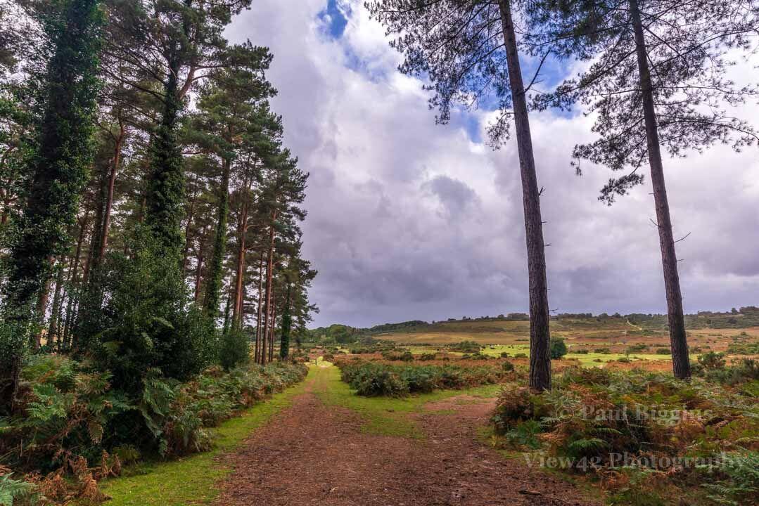 Pitts Wood Corner