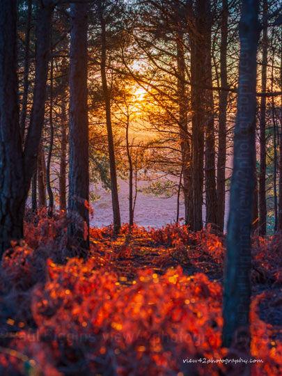 Turf Hill Sunset
