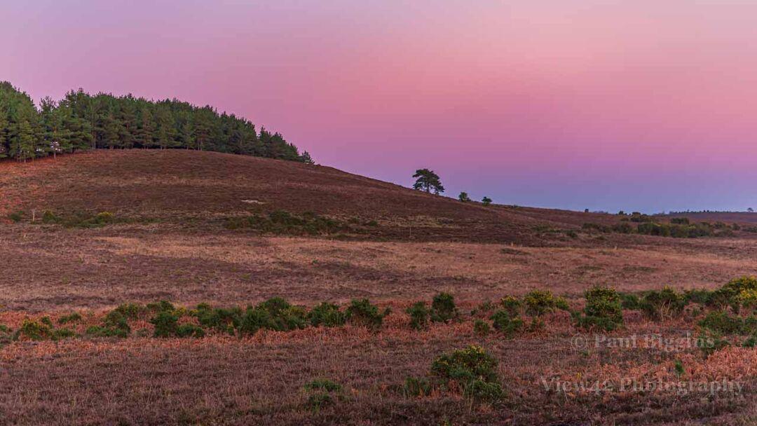 Turf Hill (purple sky)