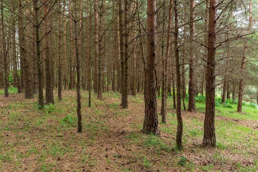 Turf Hill Trees