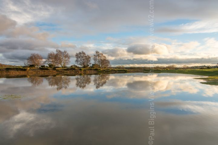 Stuckton New Forest Abbots Well pond reflection print
