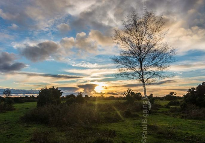 New Forest watery winter sunset print