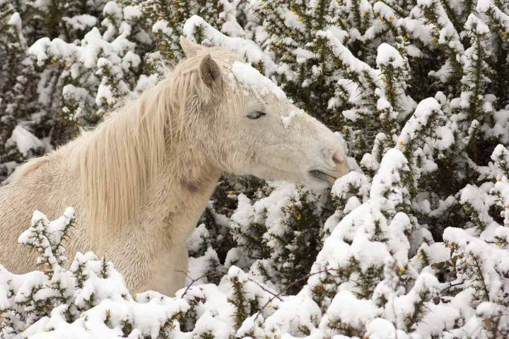 winter spring 2018 Fordingbridge New Forest