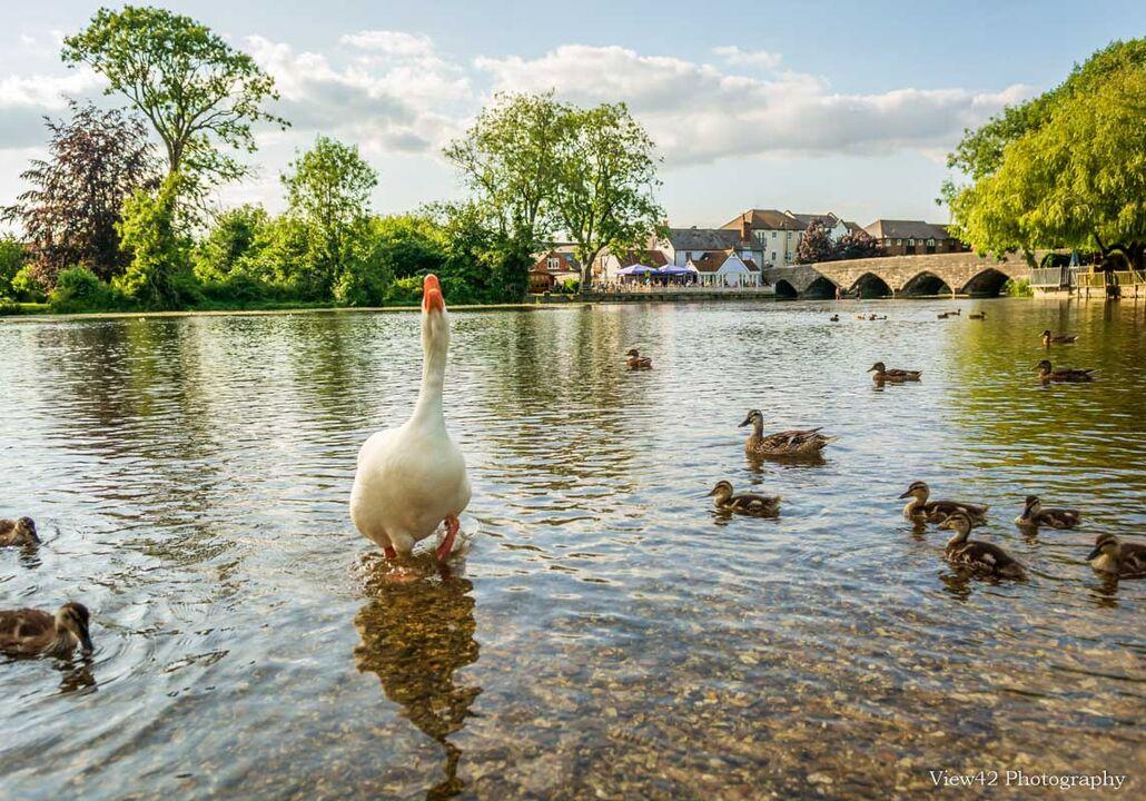Nanny Goose at Fordingbridge