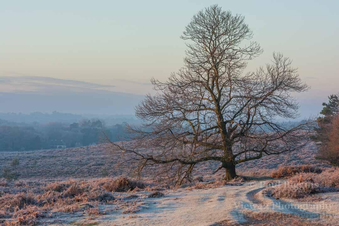 January Morning at Hasley Hill