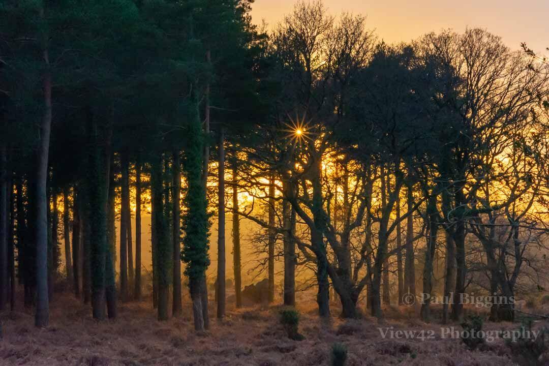 Pitts Wood Sunset