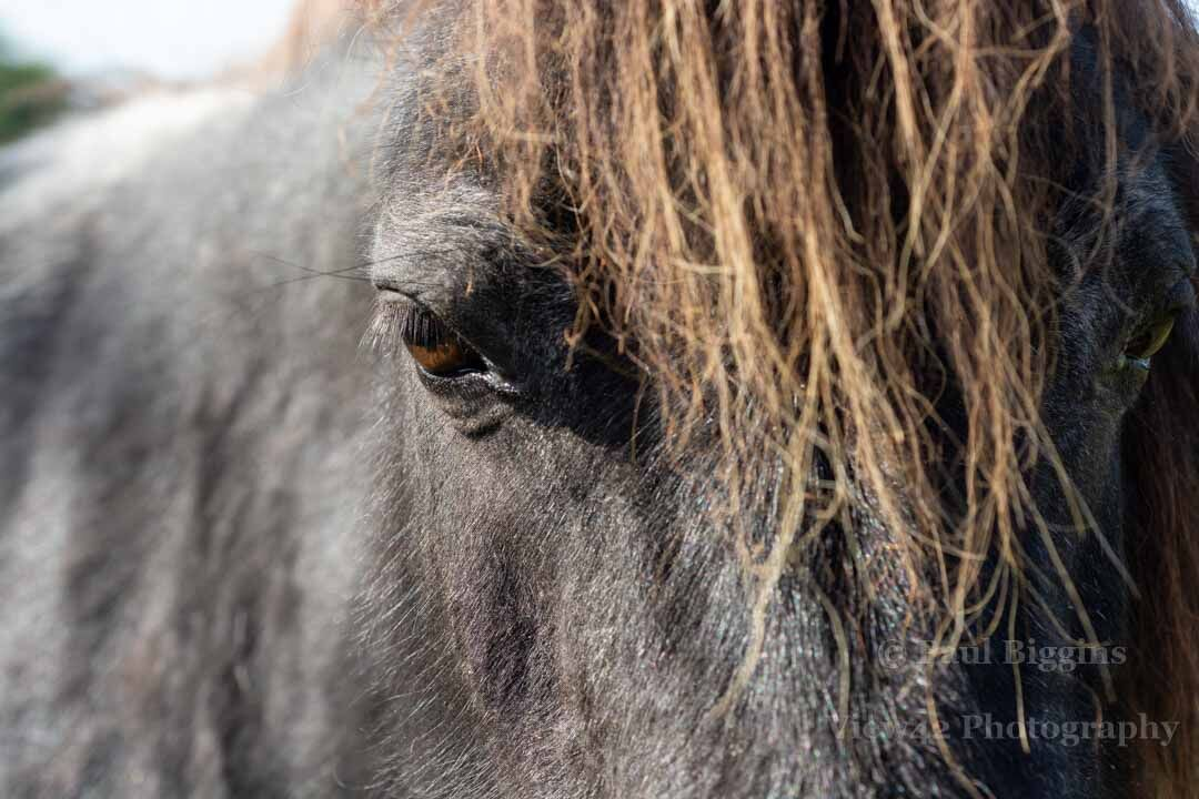 Aye Eye Pony