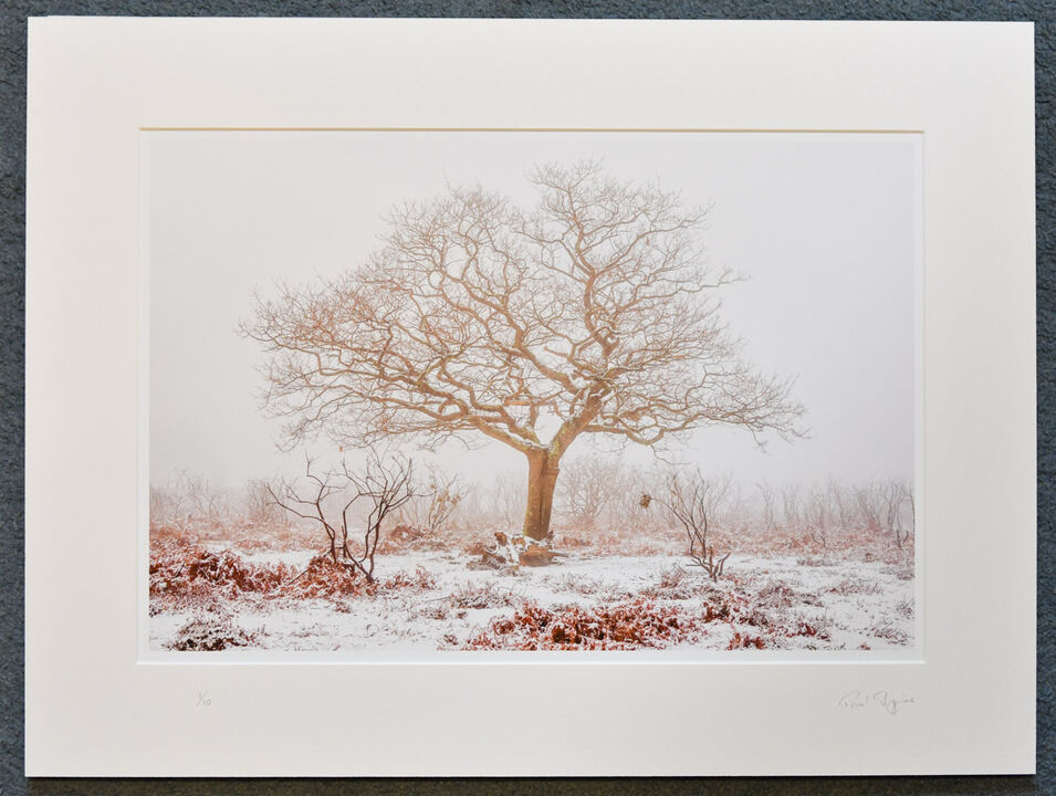 """Winter Tree, New Forest, A3+ with 24"""" x 18"""" mount, fine art paper Limited Edition. £40"""