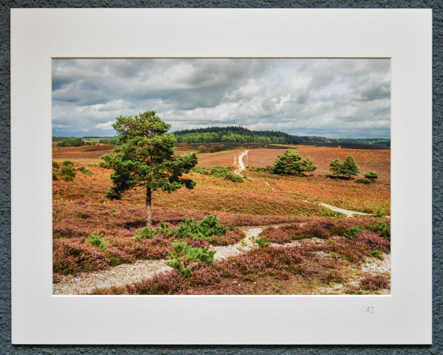 """Ibsley Common, New Forest, A3 print with 20"""" x 16"""" mount."""