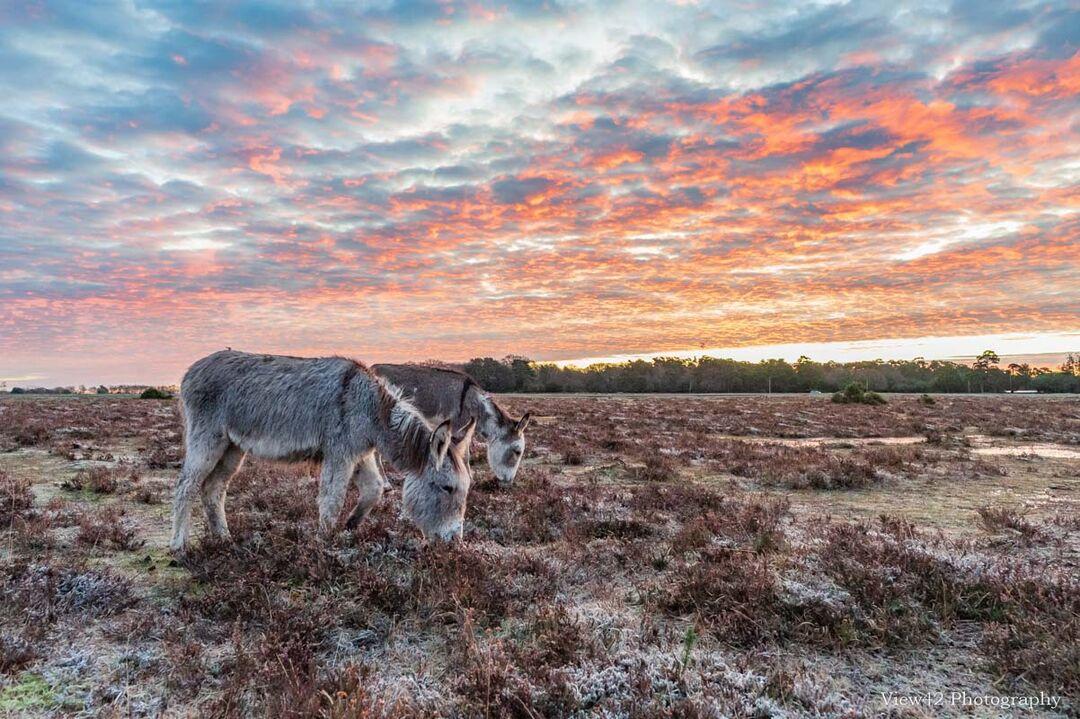 Donkeys at Bramble Hill 2
