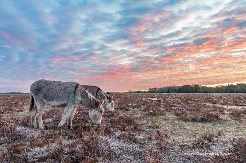 Donkeys at Bramble Hill 1