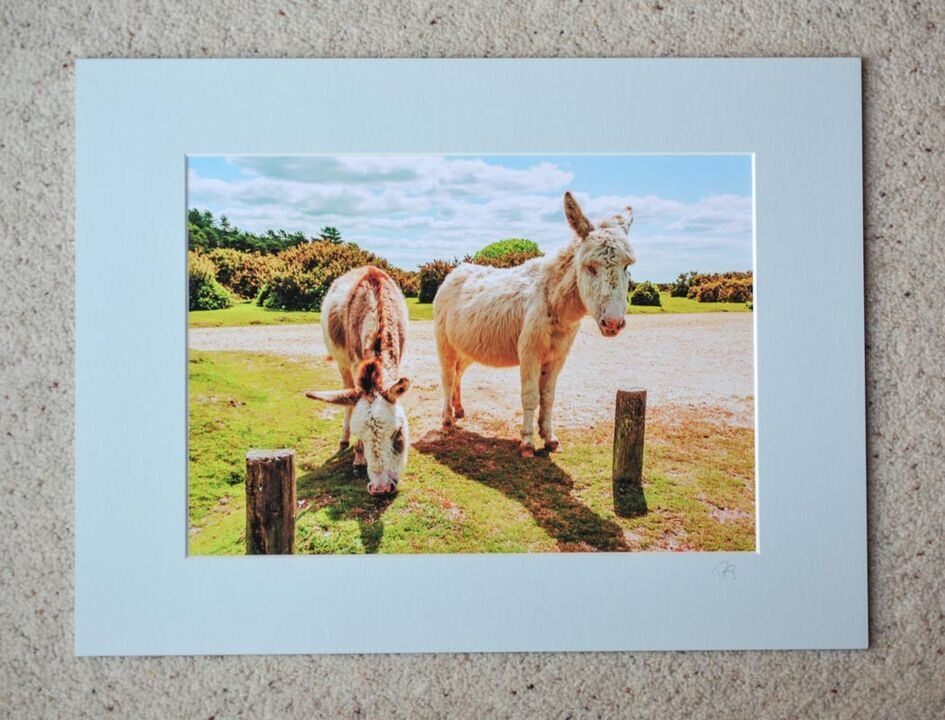 """Donkeys at Janesmoor Pond 1, A4 print with 16"""" x 12"""" mount."""