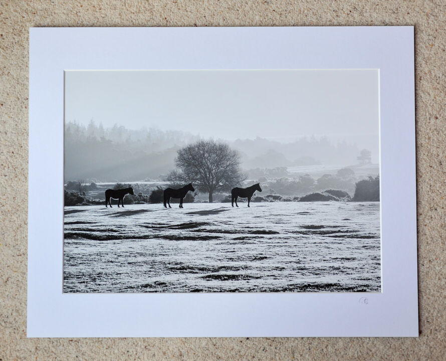"""Frosted Ponies at Ogdens, A3 print with 20"""" x 16"""" mount. £28"""