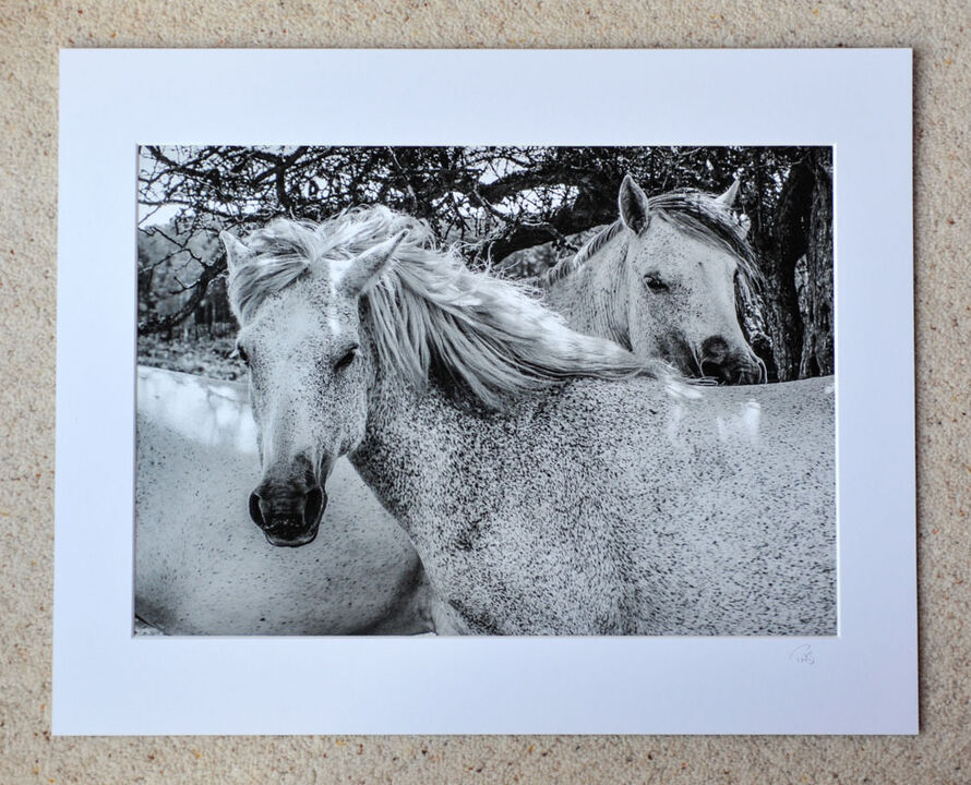 """Posing White Ponies, A3 print with 20"""" x 16"""" mount. £28"""