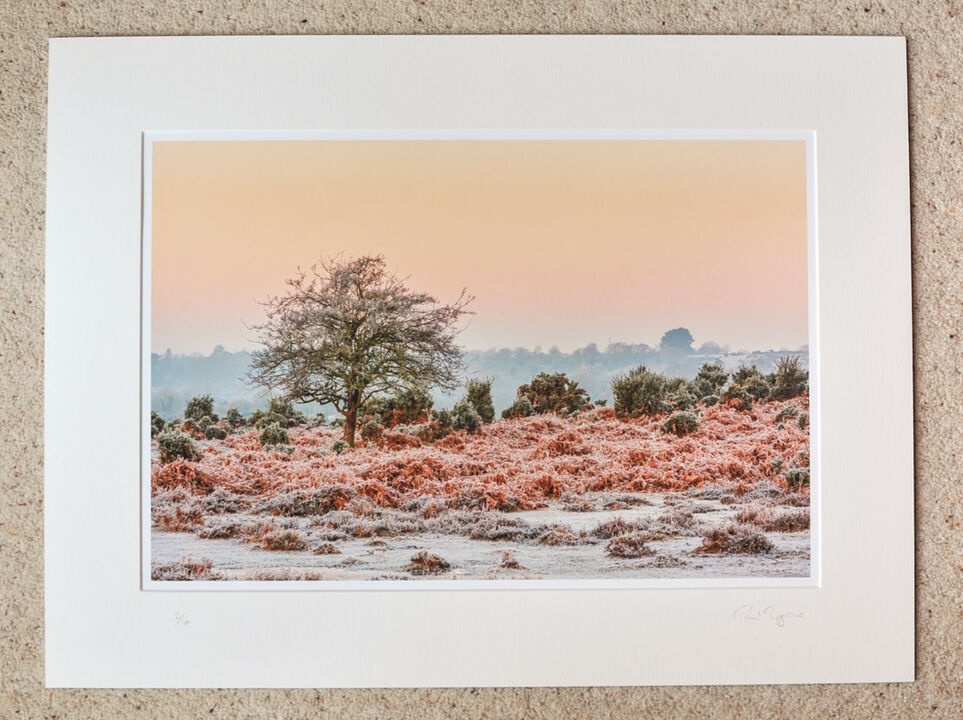 """January Morning at Ogdens, A3+ print with 24"""" x 18"""" mount, fine art paper, Limited Edition."""