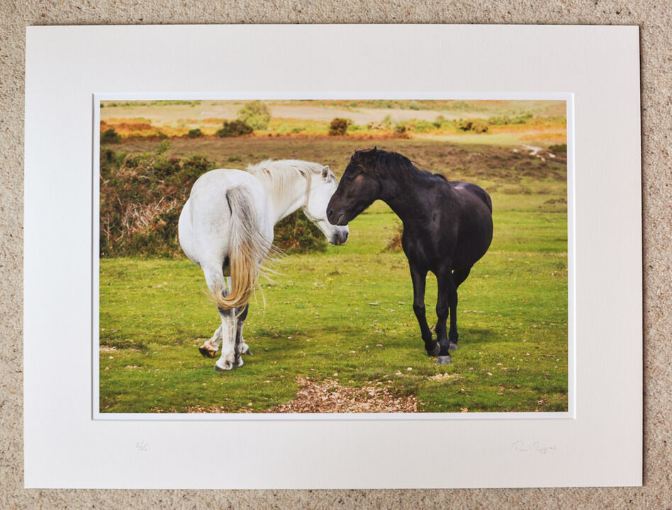 "Flirting Ponies at Ogdens, A3+ with 24"" x 18"" mount, fine art paper Limited Edition. £45"