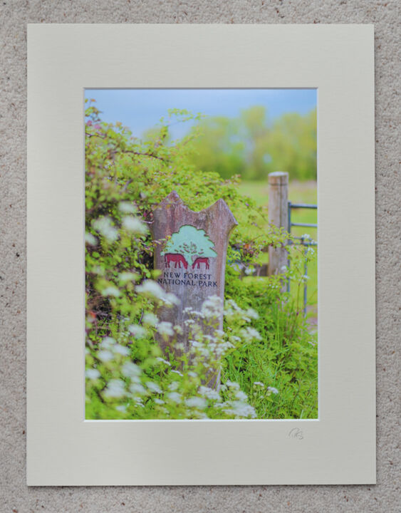 """New Forest, The Way In at Burgate Manor Farm, A4 print with 16"""" x 12"""" mount."""