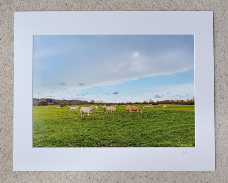 """A Break in The Weather, Avon Valley, Burgate, A3 print with 20"""" x 16"""" mount. £28"""