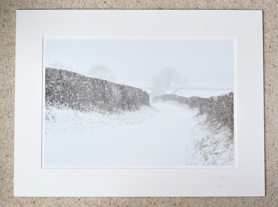 """Walking My Way Through Winter (To the New Forest via Burgate Manor Farm, A3+ with 24"""" x 18"""" mount, fine art paper Limited Edition. £45"""