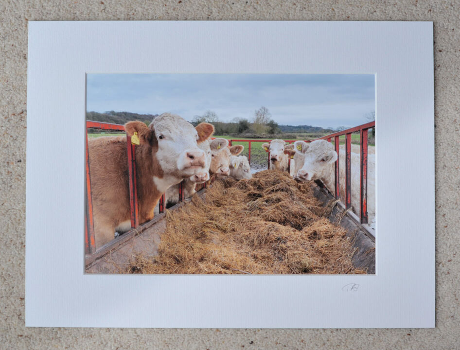 "Feeding Time in The Avon Valley, A4 print with 16"" x 12"" mount. £15"