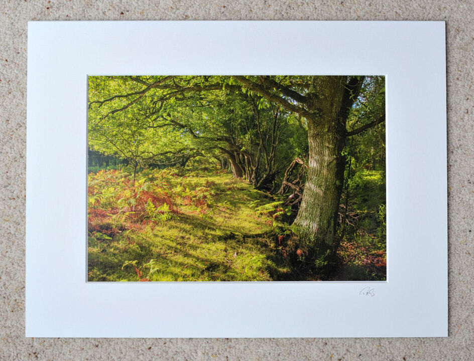 "Glades Edge, Deep in The New Forest, A4 print with 16"" x 12"" mount. £20"