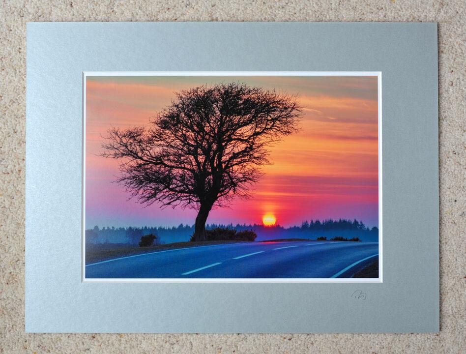 "Deadman Tree, A4 print with 16"" x 12"" mount. £20"