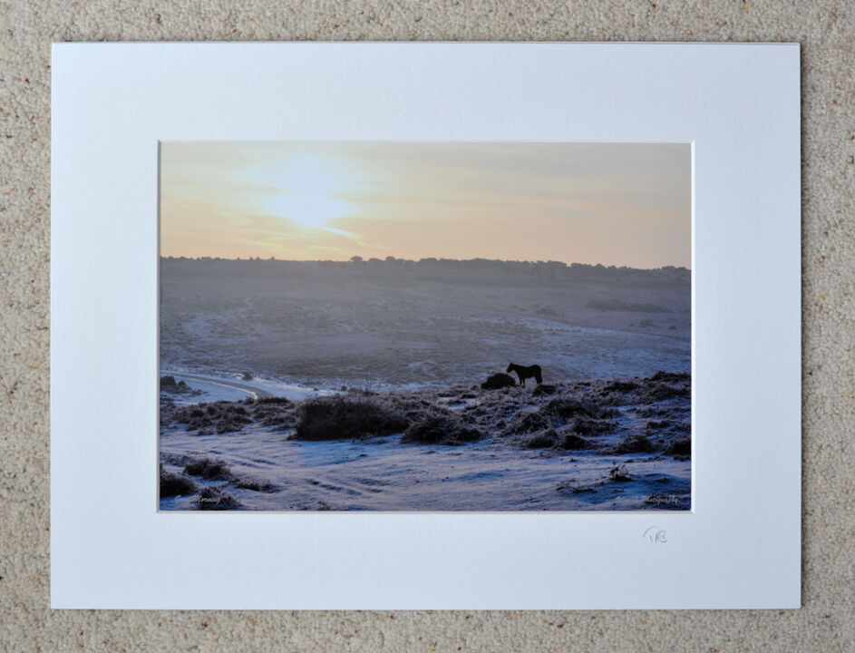 "January Morning, Ashley Walk, New Forest, A4 print with 16"" x 12"" mount. £15"