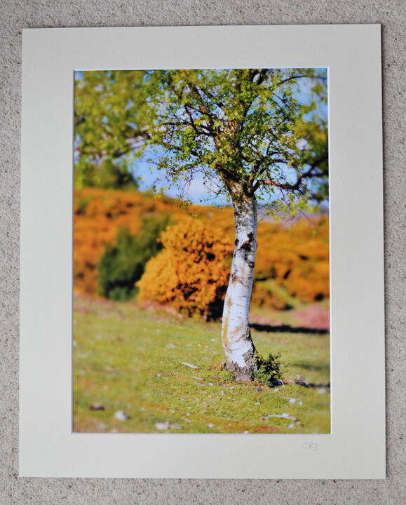 "Silver Birch, miniaturised, A3 print with 20"" x 16"" mount. £20"