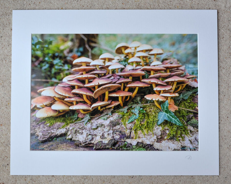 """New Forest Toadstools, A3 print with 20"""" x 16"""" mount. £28"""