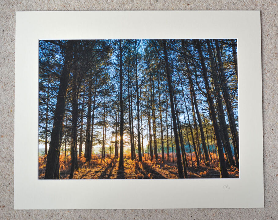 """Through The Trees, Turf Hill, A3 print with 20"""" x 16"""" mount. £28"""