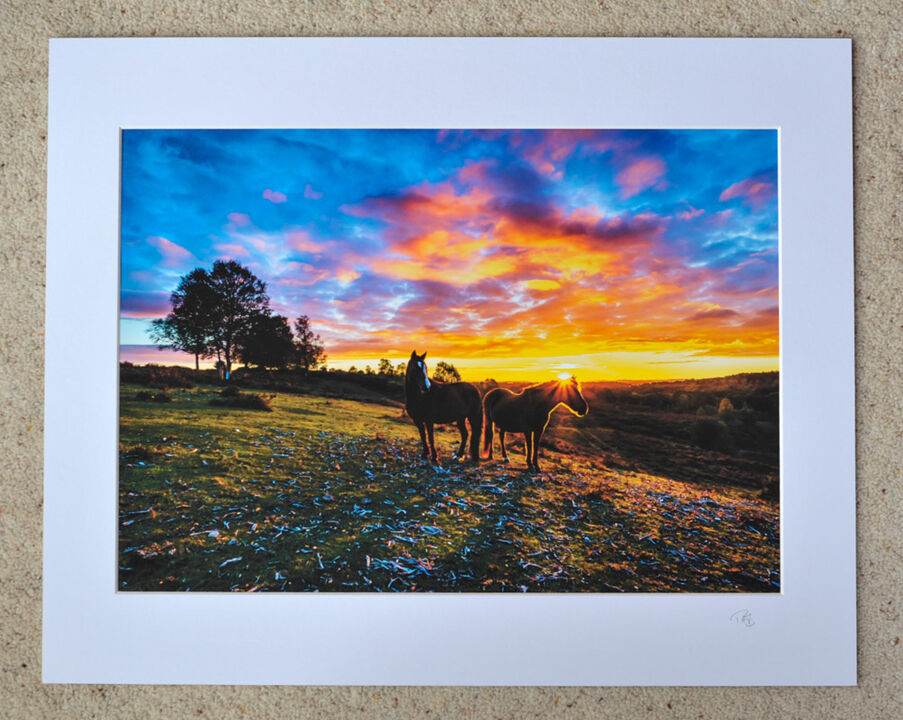"""Sunset Ponies, A3 print with 20"""" x 16"""" mount. £28"""