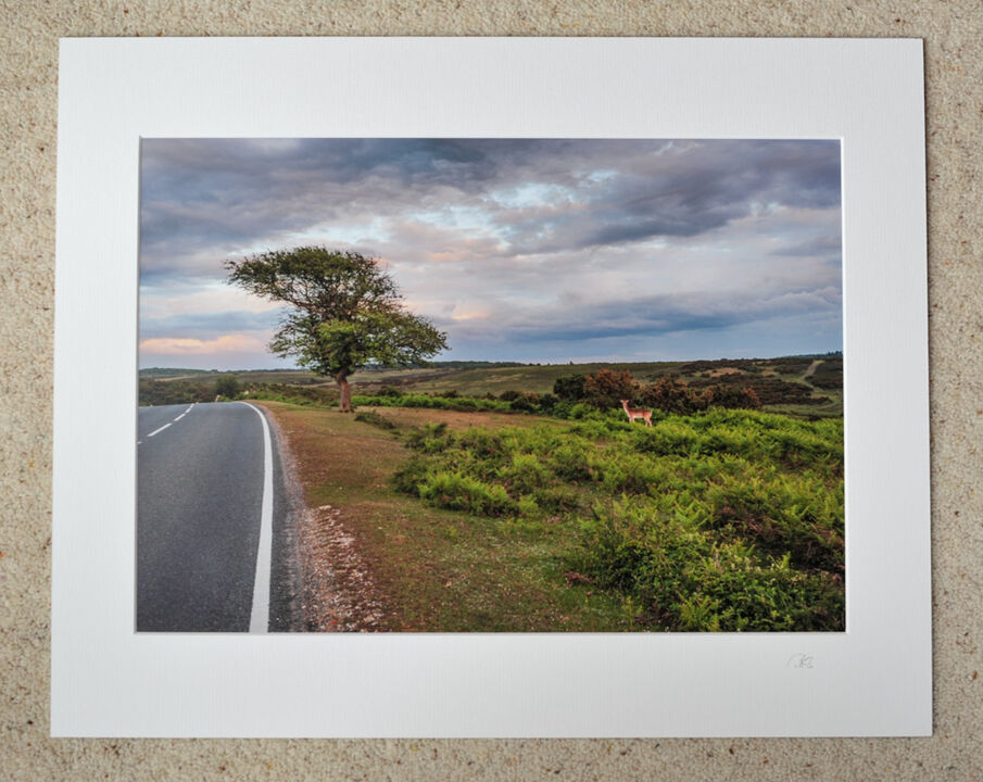"Deer at Deadman Corner, A3 print with 20"" x 16"" mount. £28"