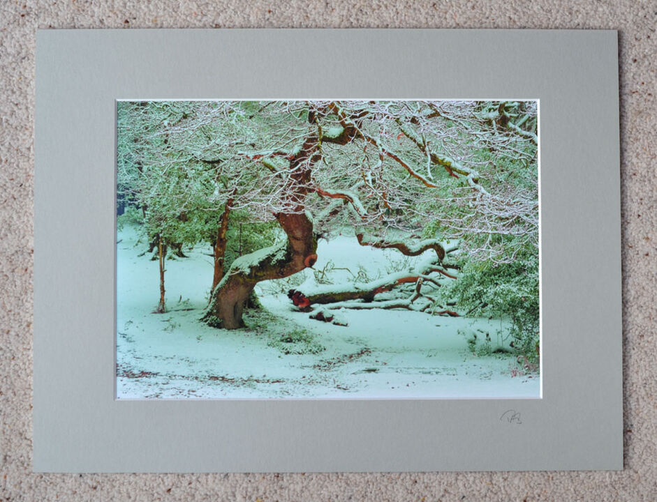 """Snow at Bramble Hill, A4 print with 16"""" x 12"""" mount. £20"""