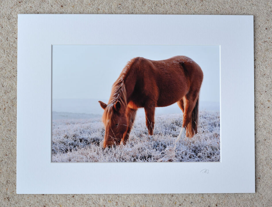 "One Sock Pony, A4 print with 16"" x 12"" mount. £15"