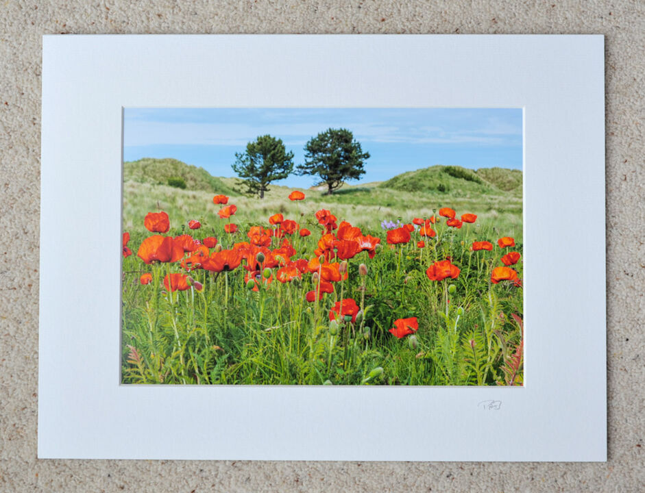 "Wild Poppies, A4 print with 16"" x 12"" mount. £20"
