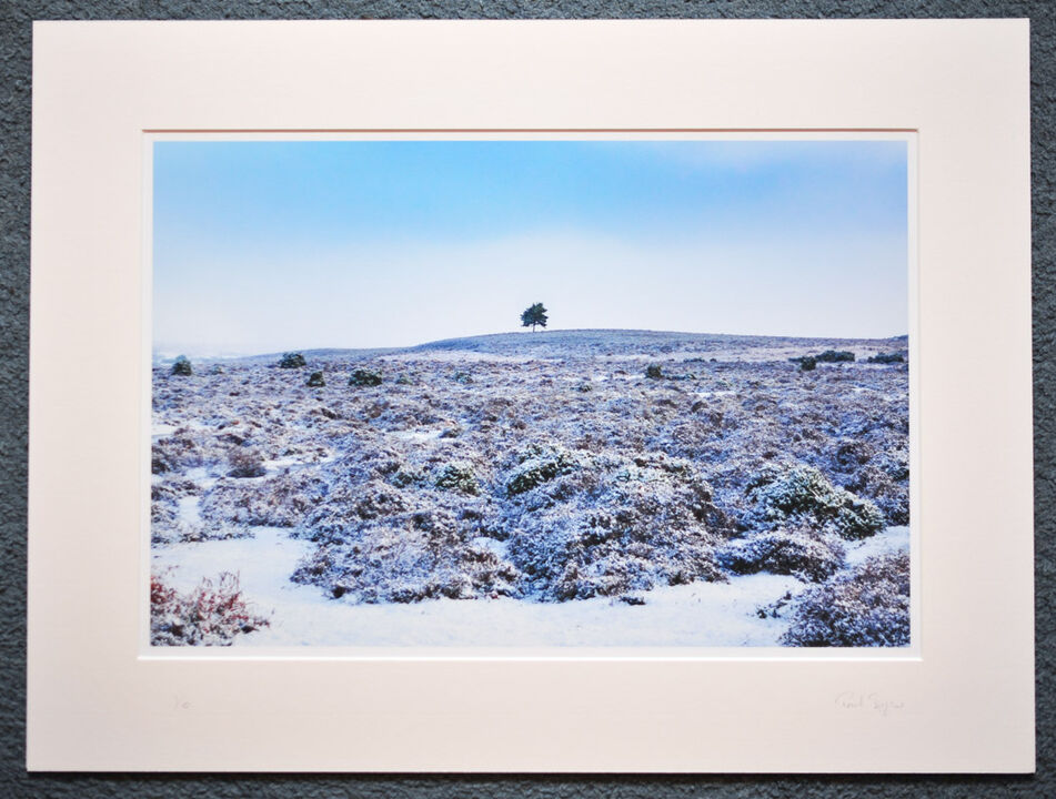 "The Tree on The Hill, New Forest, A3+ with 24"" x 18"" mount, fine art paper Limited Edition. £40"