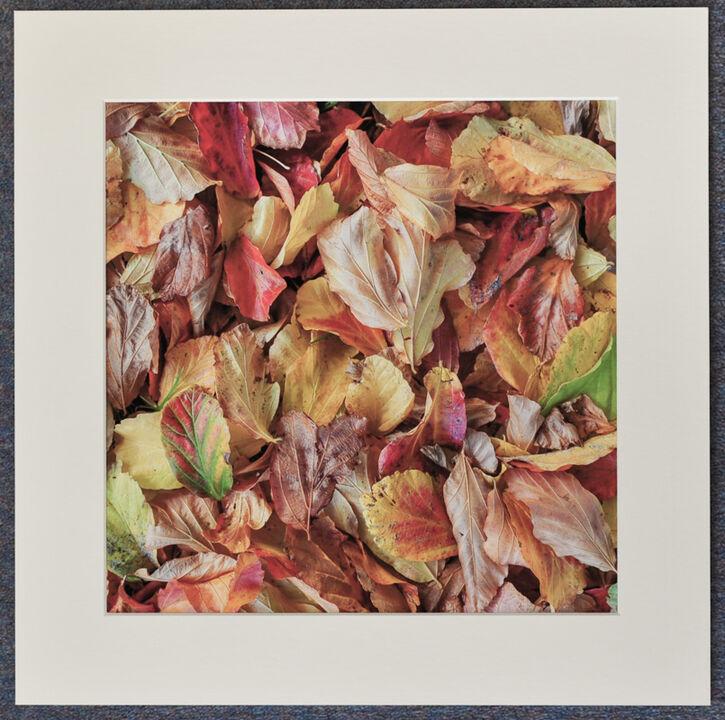Fallen Autumn Leaves 1, 30cmx30cm print on 40cmx40cm mount. £24