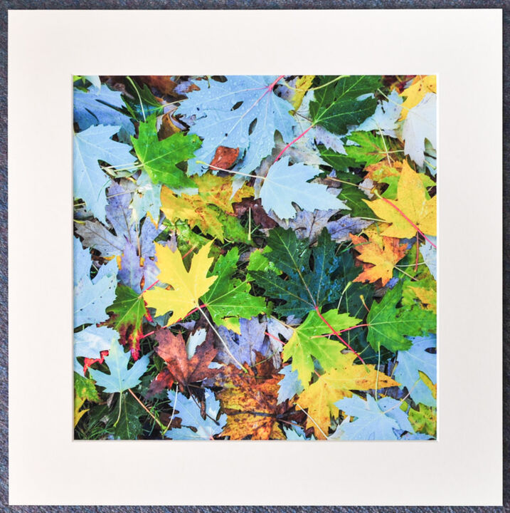 Fallen Autumn Leaves 3, 30cmx30cm print on 40cmx40cm mount. £24