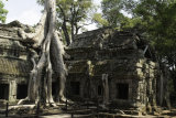 The jungle is taking over at Ta Prohm