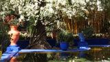 Marjorelle garden